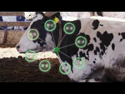 牛の行動をIoTで分析「U-motion(R)」 -- Short Version