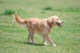 dog1 16.51.59.jpg