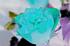 rose-negate.png