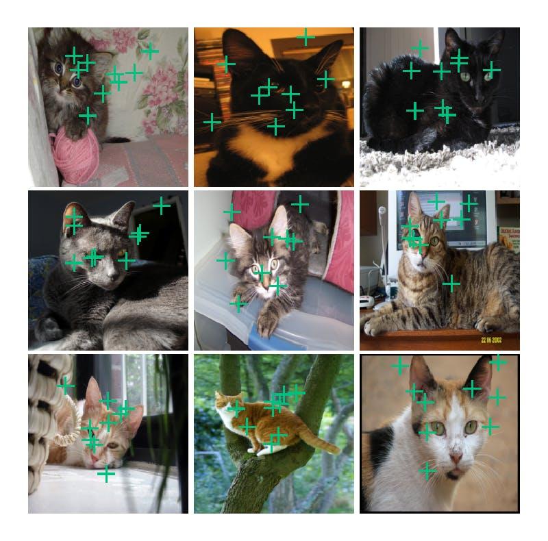 cat_facial_11.png
