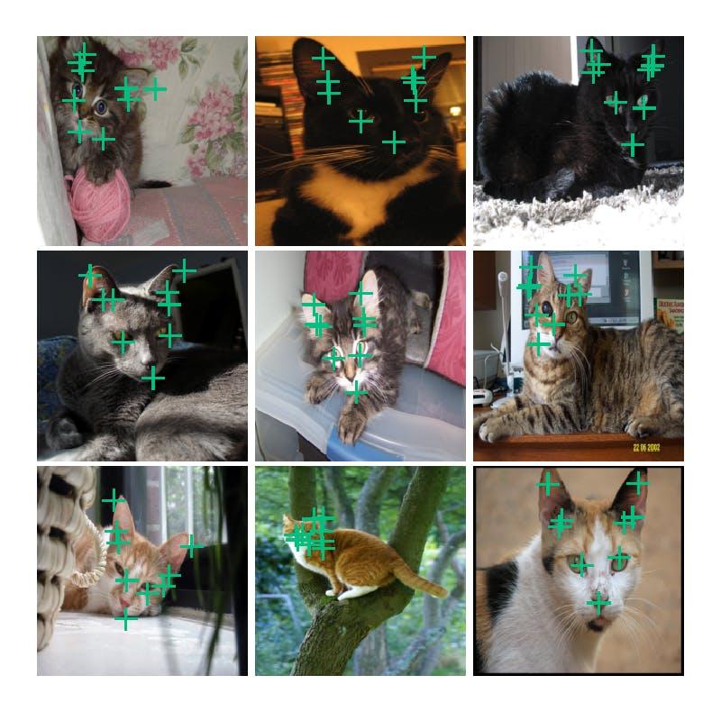 cat_facial_15.png