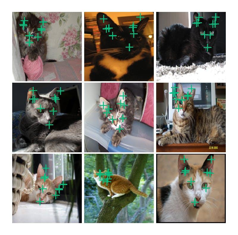 cat_facial_16.png