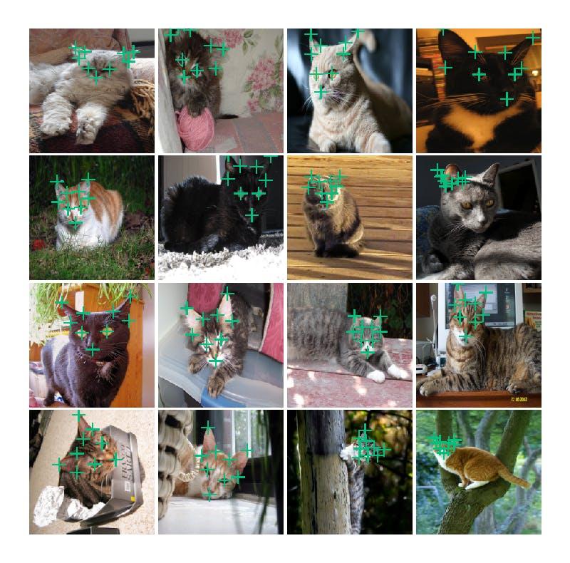 cat_facial_03.png