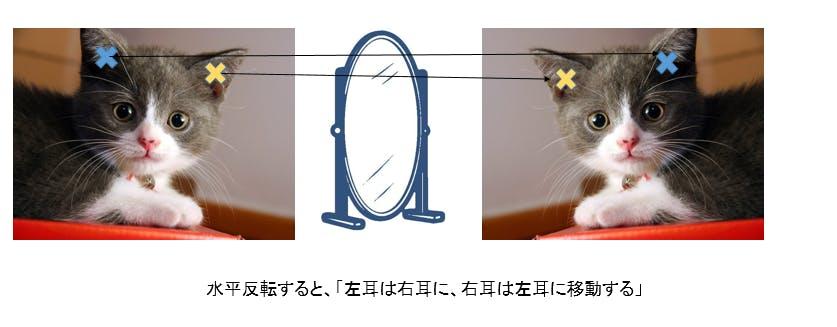 cat_facial_05.png