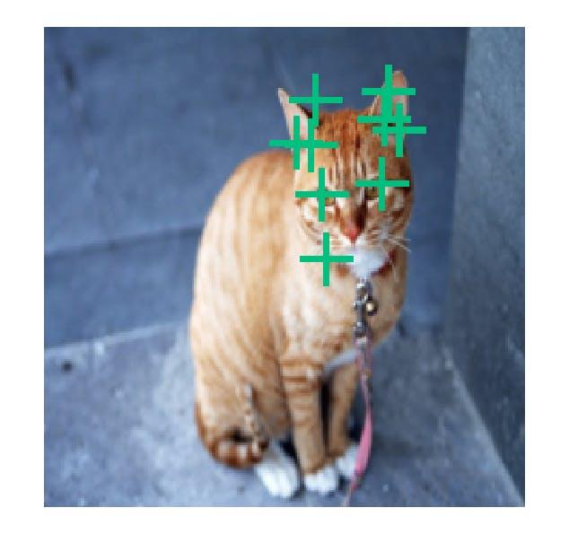 cat_facial_09.png