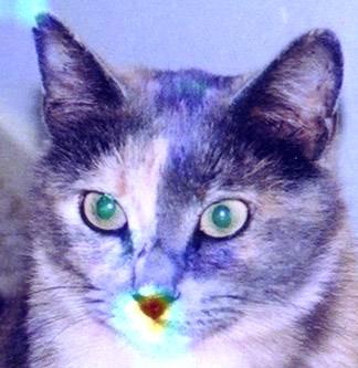 cat1700.jpg