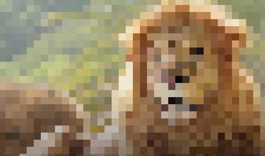 ライオン2.PNG