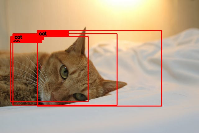 cat_marked.png