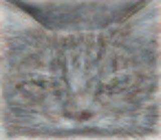 catrecog.png