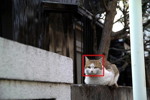 detect_cat-nerima1.jpg