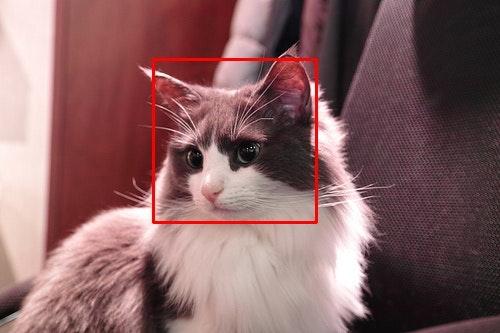 detect_edo1.jpg