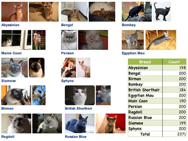 cat_classes.jpg