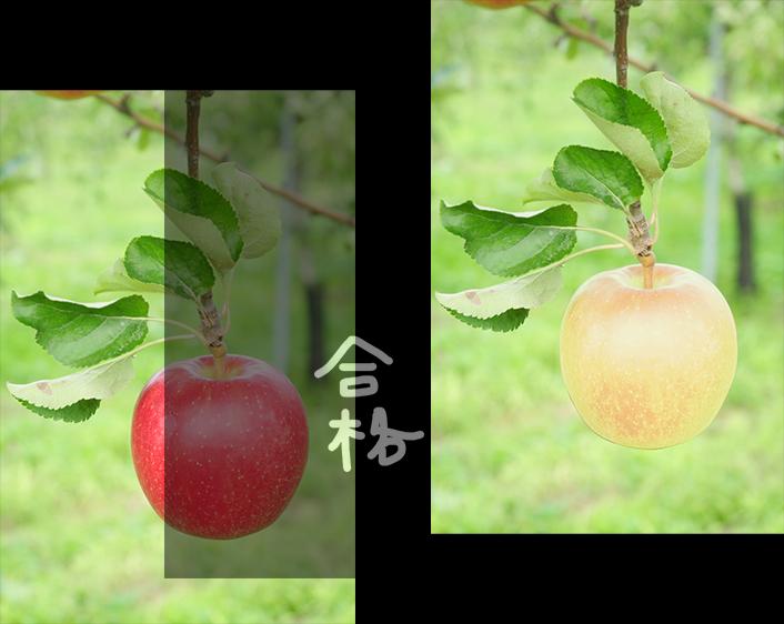 finishimg_apple_make2.png