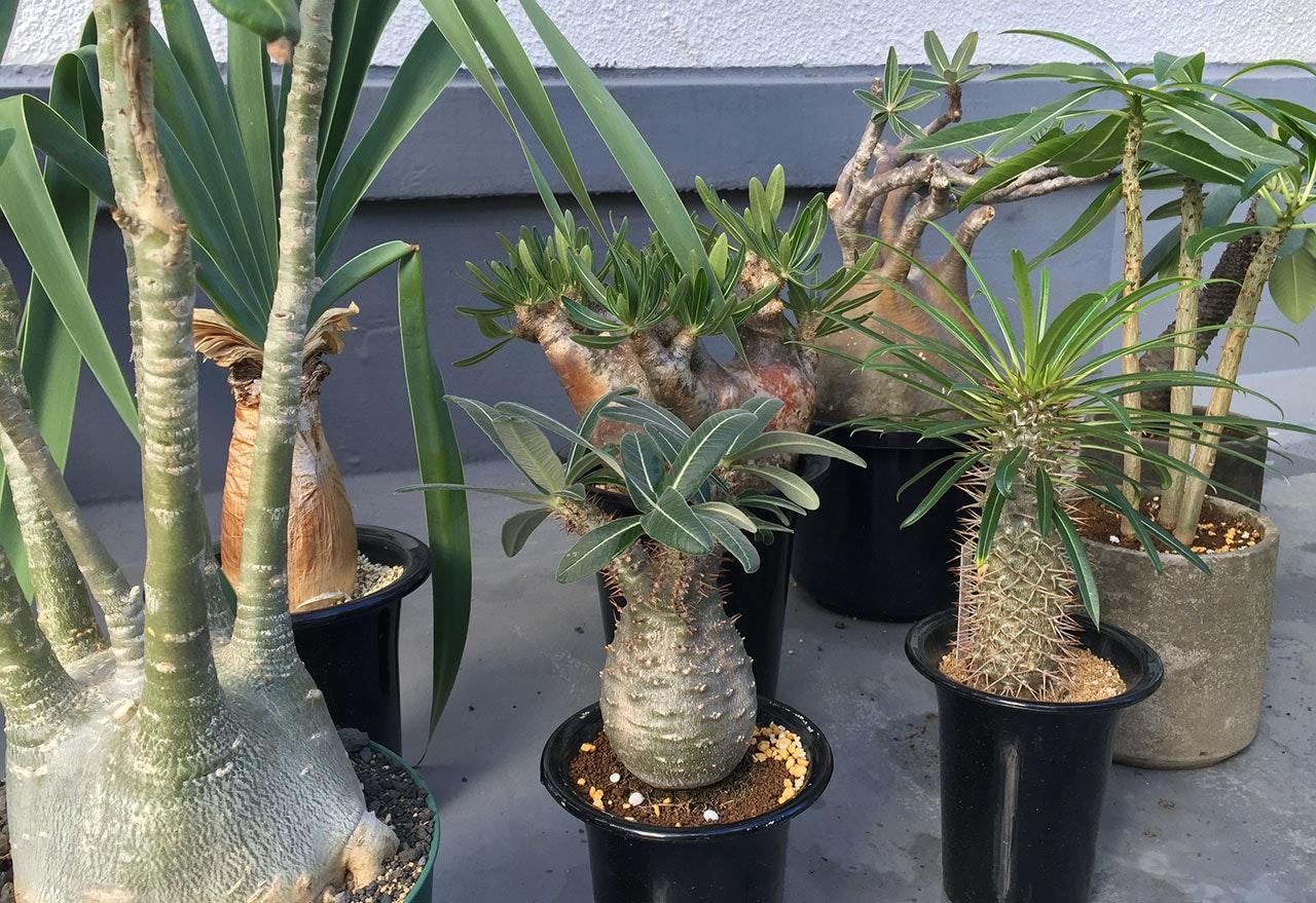 plants_south.jpg