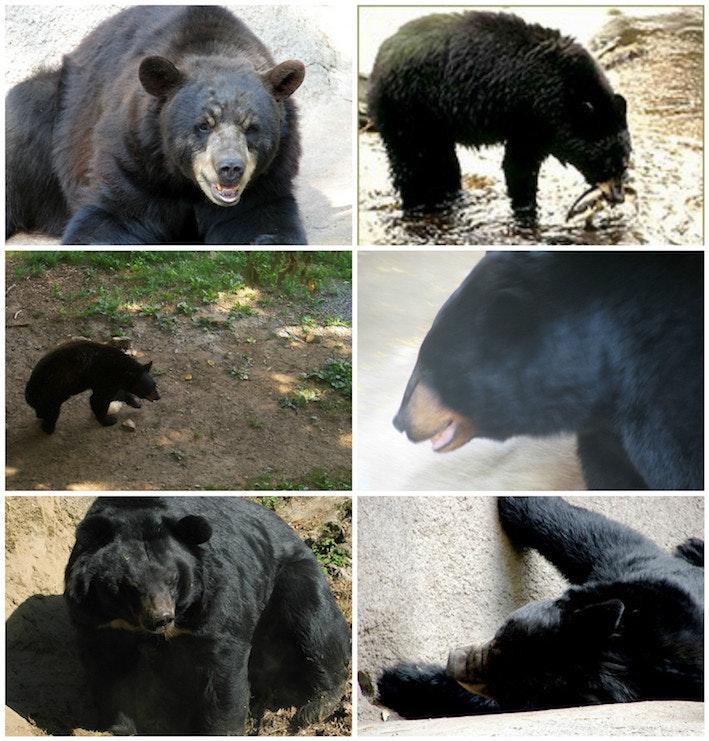 bear-domain.jpeg
