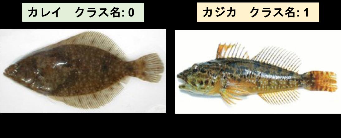 分類する魚種.png