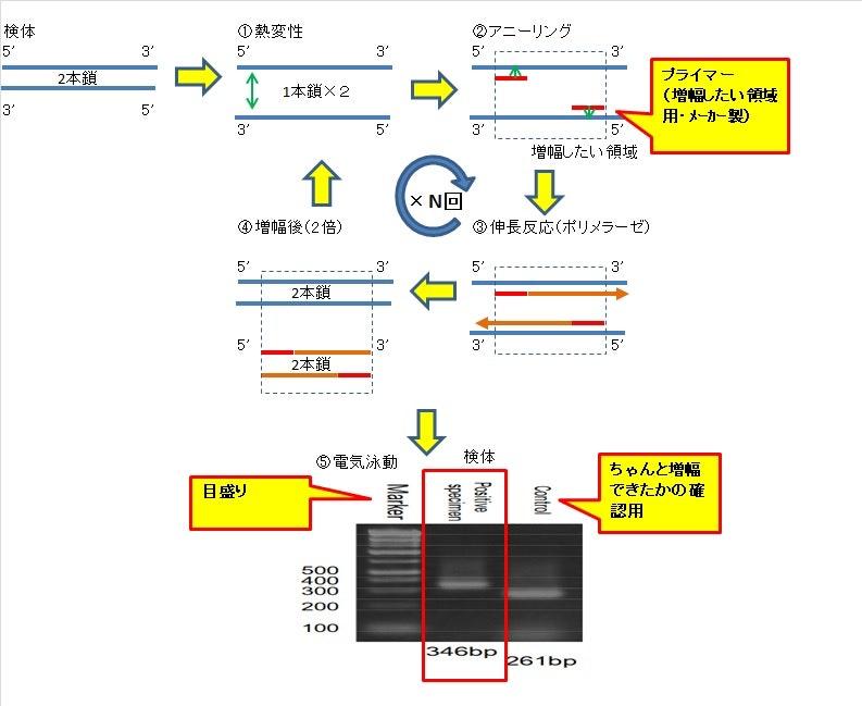 PCR-detection.jpg