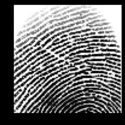 crop_fingerprint.png