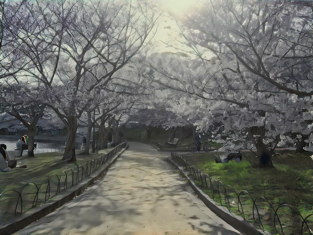 sakura_anime.jpg